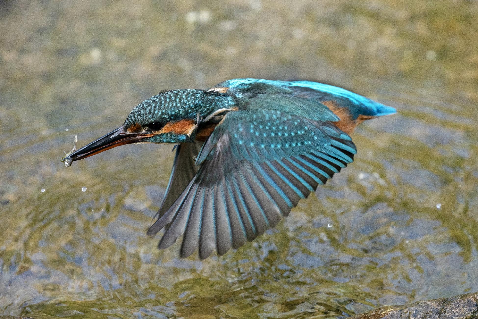 Flying fisherwoman