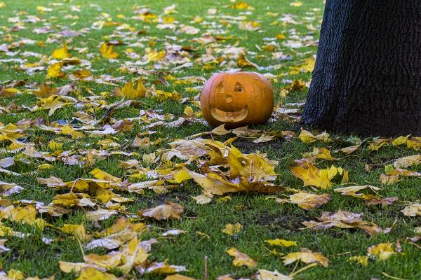 the forgotten pumpkin by meyeview