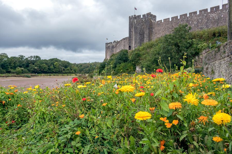 PEMBROKE, PEMBROKESHIRE/UK - SEPTEMBER 15 : View of the castle a