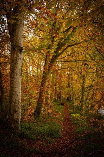 A walk thru Autumn by neil75