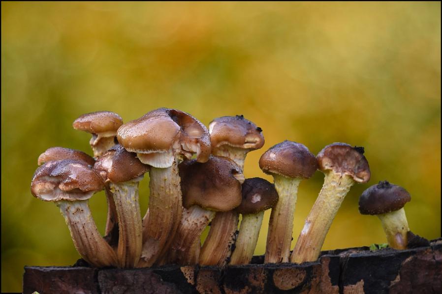 fungi on parade