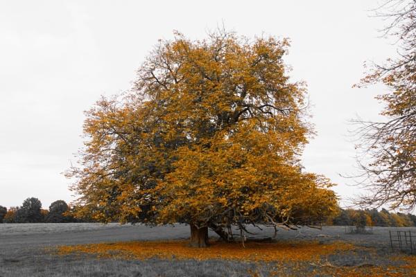 Autumn Colours by JonnySP