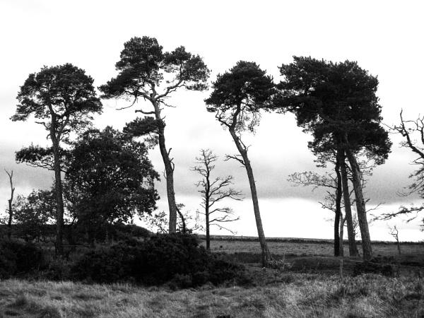 November trees by derekp