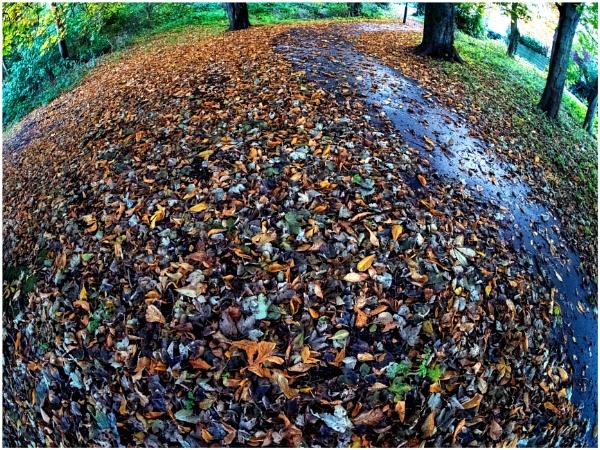 Hill Path by mac