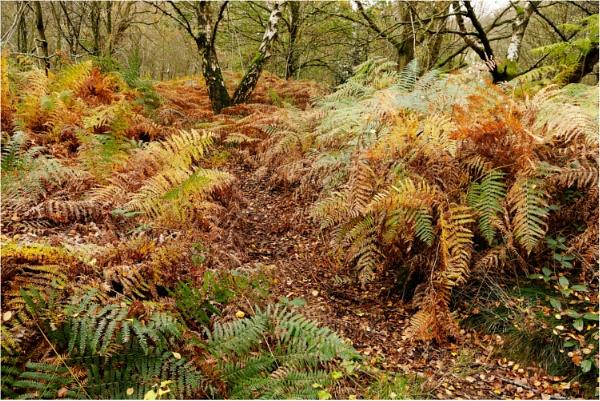 Woodland Walk by dark_lord