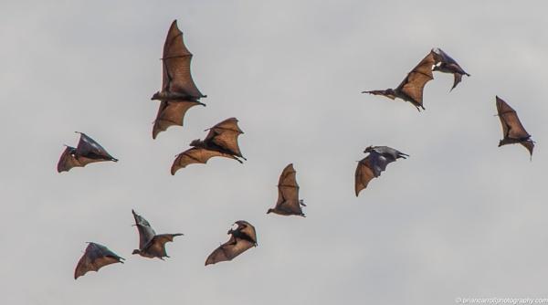 Halloween bats by brian17302