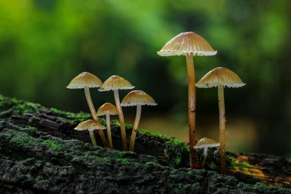 Fungi family by DCox