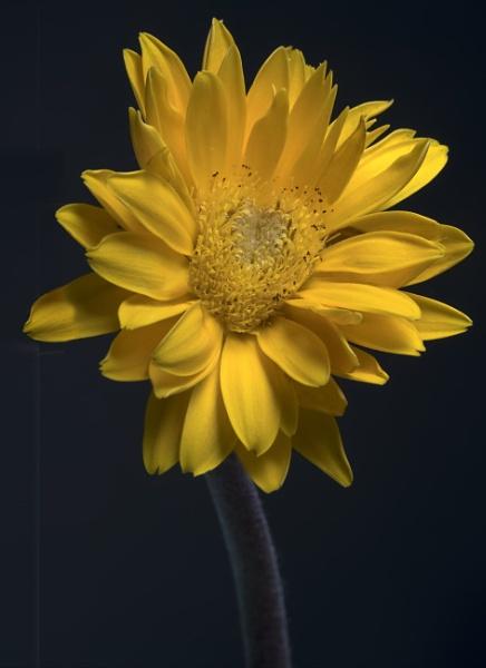 Floral sunshine :) by deavilin