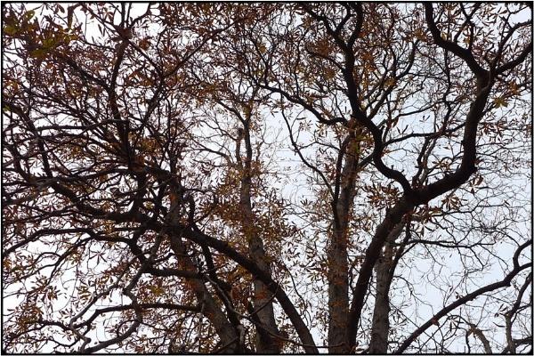 november tree by FabioKeiner