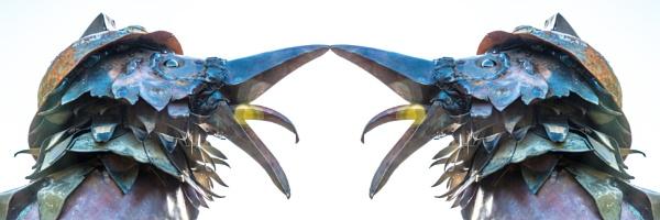 beak to beak by jacomes