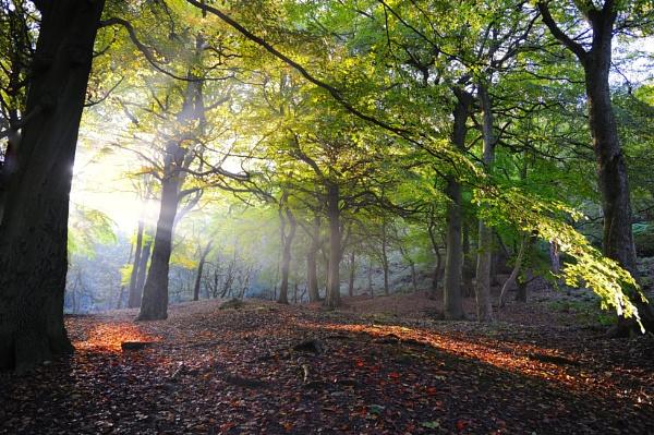 Autumn View by robertsnikon