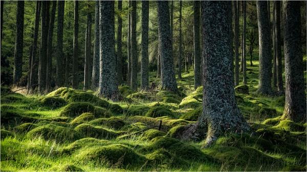 Burtness Wood Buttermere by Leedslass1