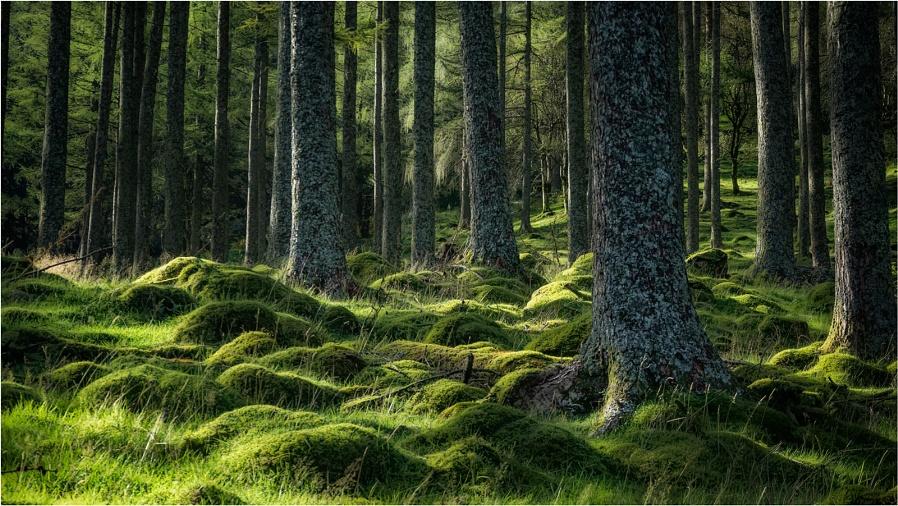 Burtness Wood Buttermere