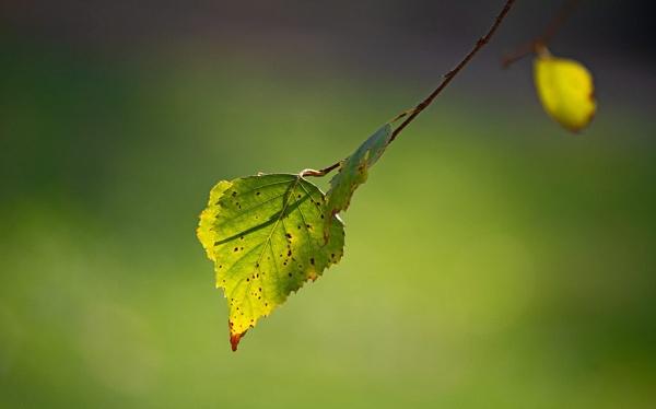 Beauty of green by LaoCe