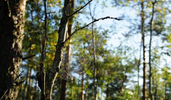 Spiderweb by SauliusR