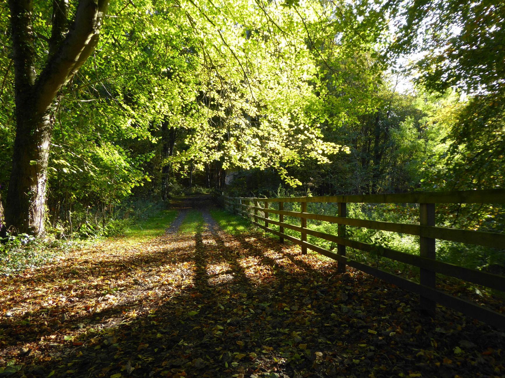 An Autumn Walk Through the Wood