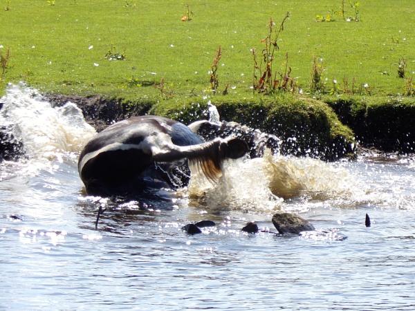 Horse Bath by ColinScholes8854