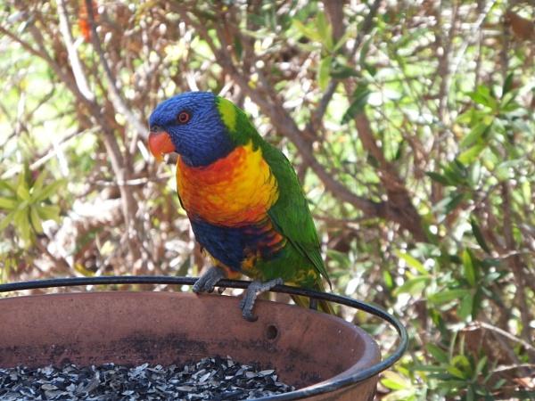 A Parrot by Hinkydinky