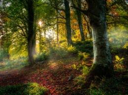 ethereal autumn