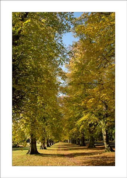 Lime Tree Avenue by Steve-T