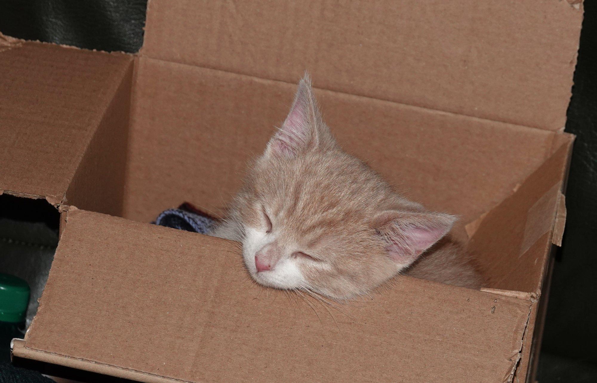 Life is an unfolding box