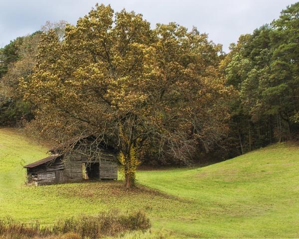 Autumn in North Carolina by jbsaladino