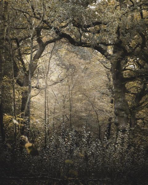Forest door by true