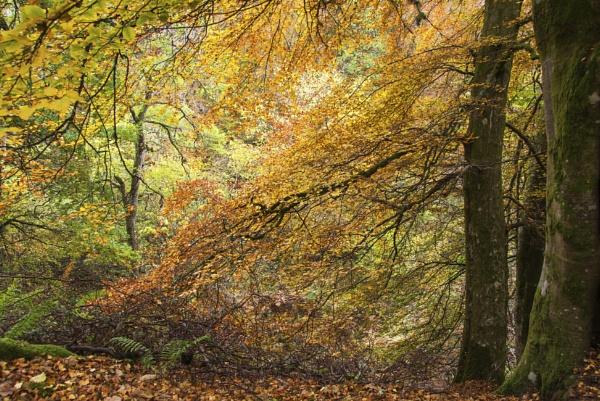 The Glory of Autumn by Irishkate