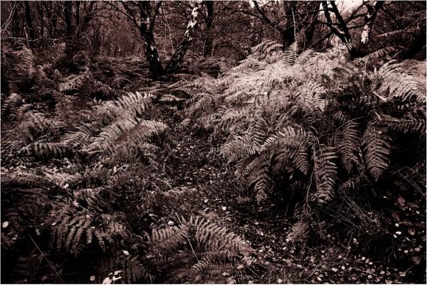 Woodland Walk 2 by dark_lord