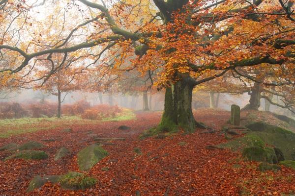 Autumn by Trevhas
