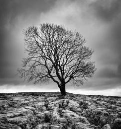 The Malham Tree.