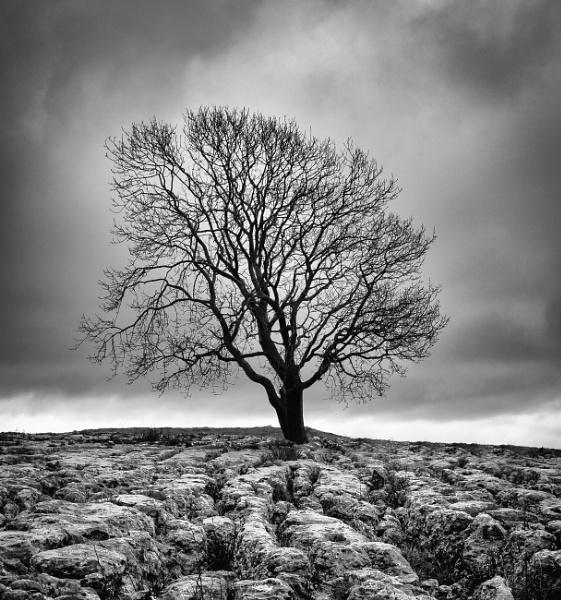 The Malham Tree. by Alex64