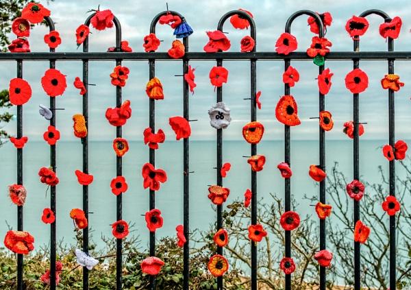 poppies day by mogobiker