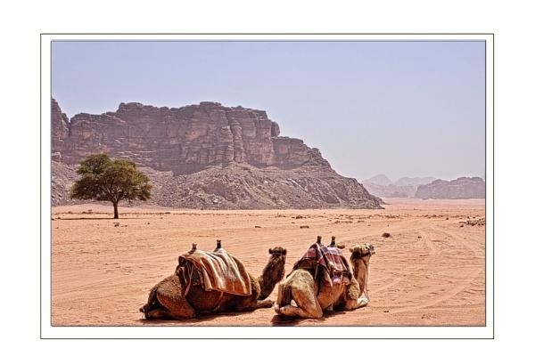 Wadi Rumm by Howard2