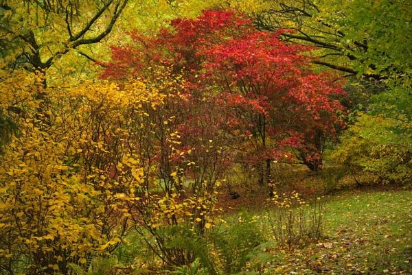 Autumn colours by alfpics