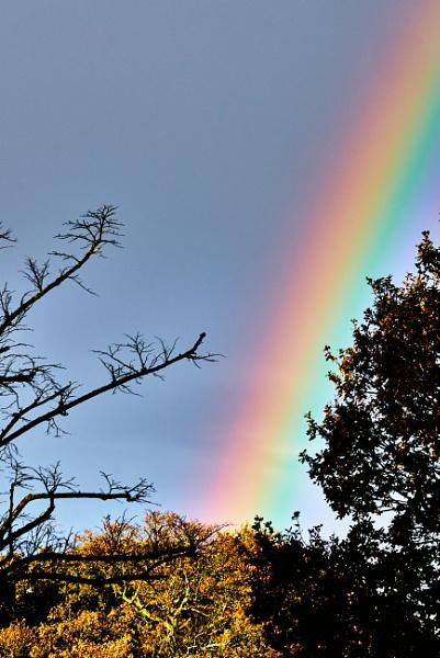 Autumn Rainbow by JJGEE