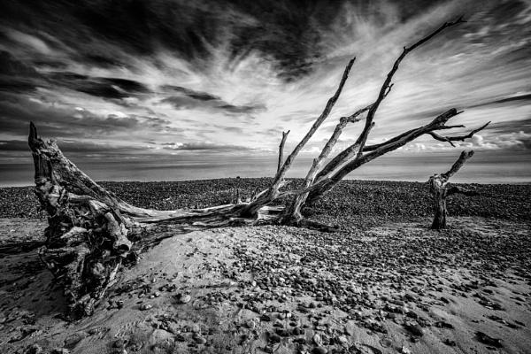 The Fallen Tree by MartinLeech