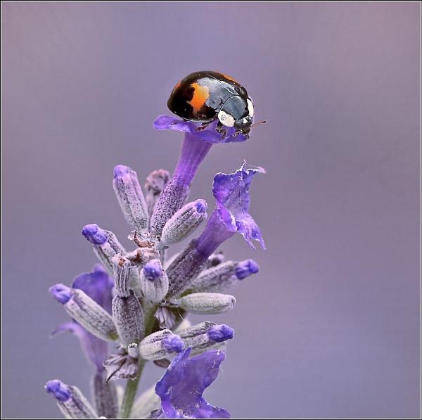 Ladybird landing pad. !! by bricurtis