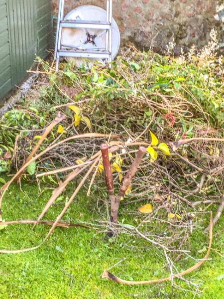 Garden rubbish. by Pinarellopete