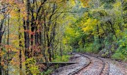 Foliage ( Chester County, PA)
