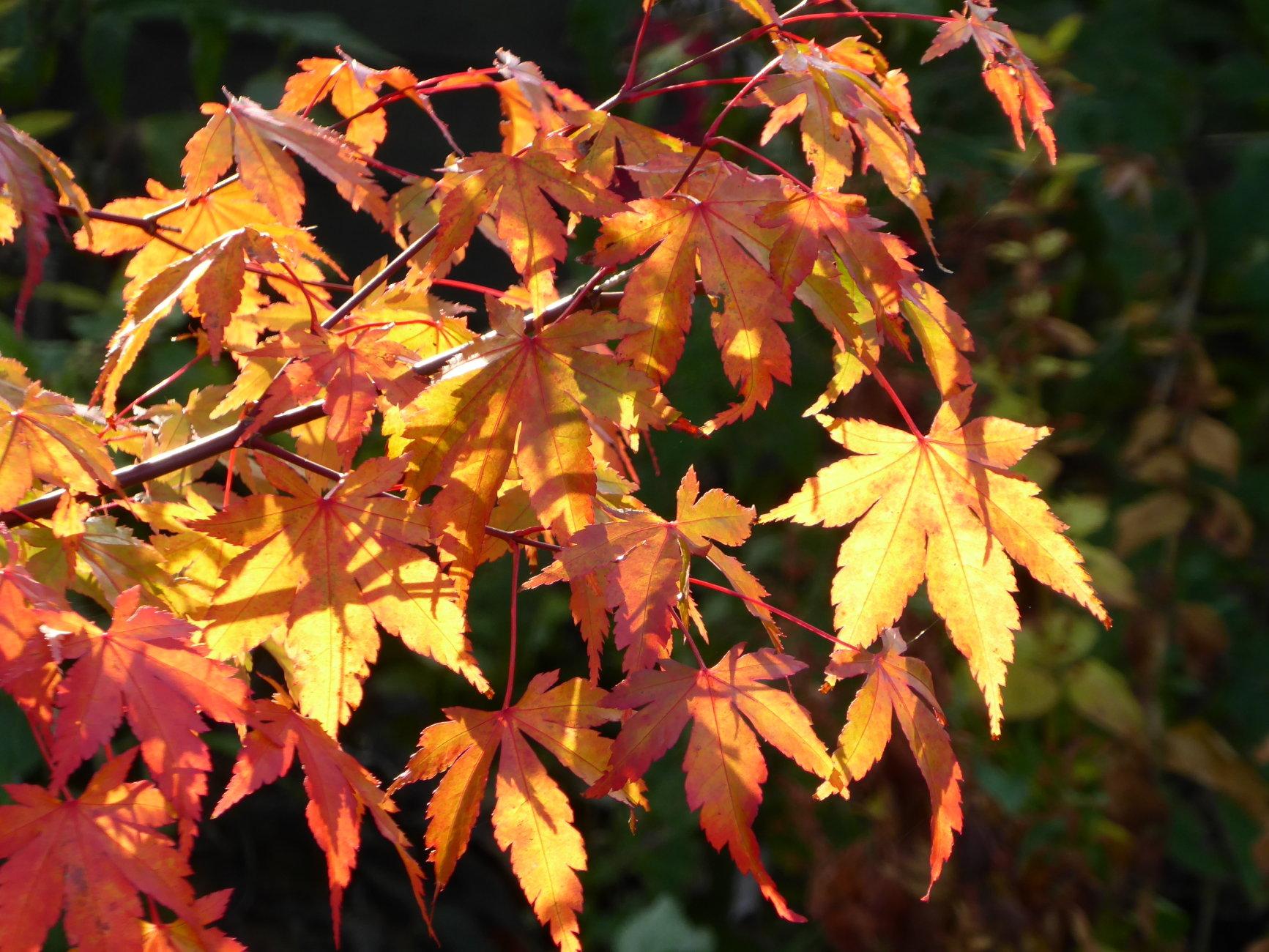 Sunshine on Leaf