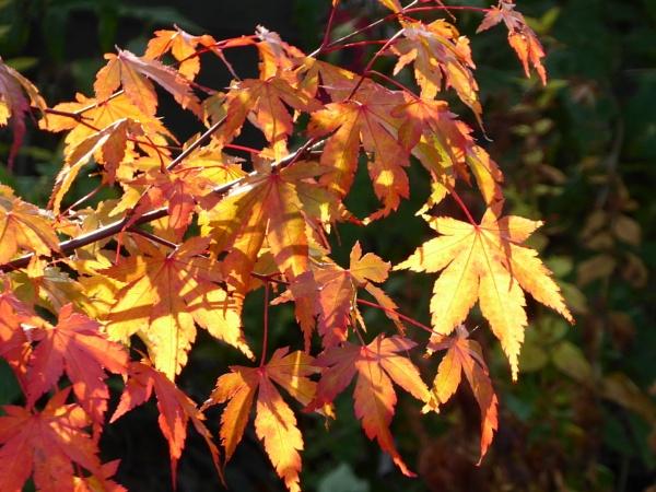 Sunshine on Leaf by BarbaraR