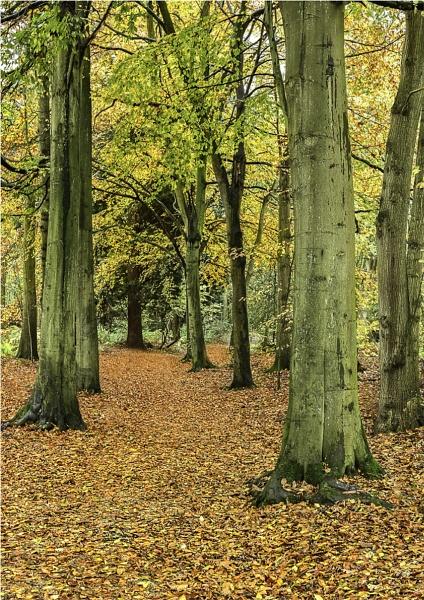 Autumn colours by koiboy