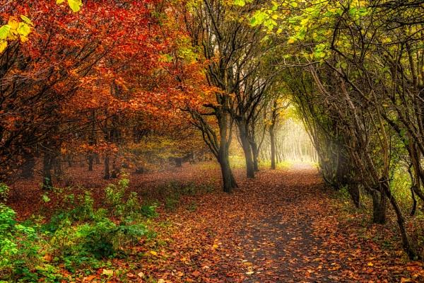 Way to Autumn by douglasR