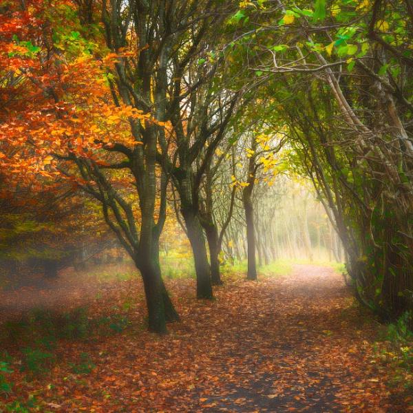 Pastel coloured Autumn by douglasR