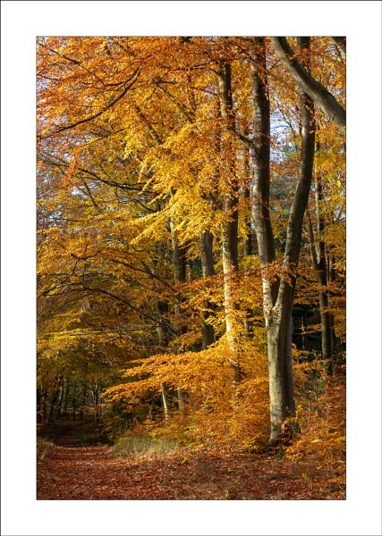 Sherwood Forest by Steve-T