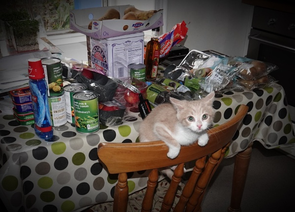 Help with the groceries? by HobbitDave