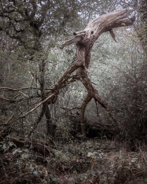 Tree monster by true