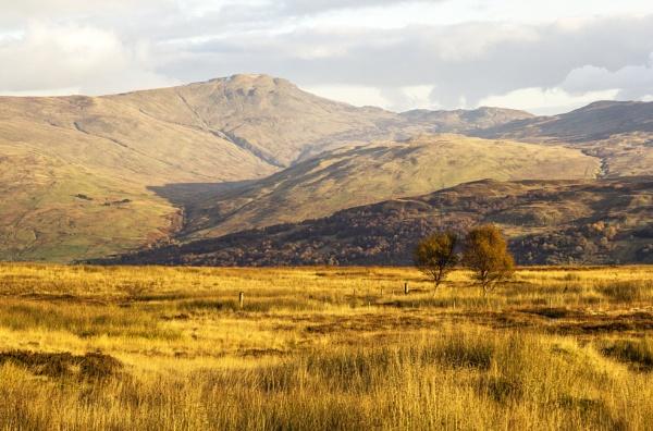 Moorland Gold by Irishkate