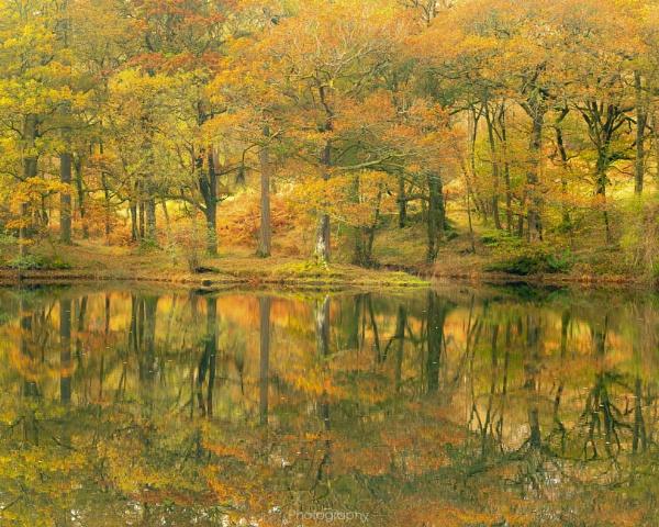 Autumn Glory by Stumars